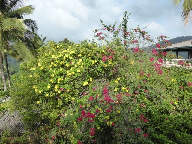 Bougainvillea and hibiscus line the drive.