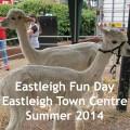Alpaca Eastleigh feature