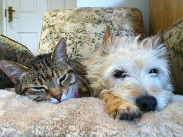 Joules the cat and Millie -  best friends ever.