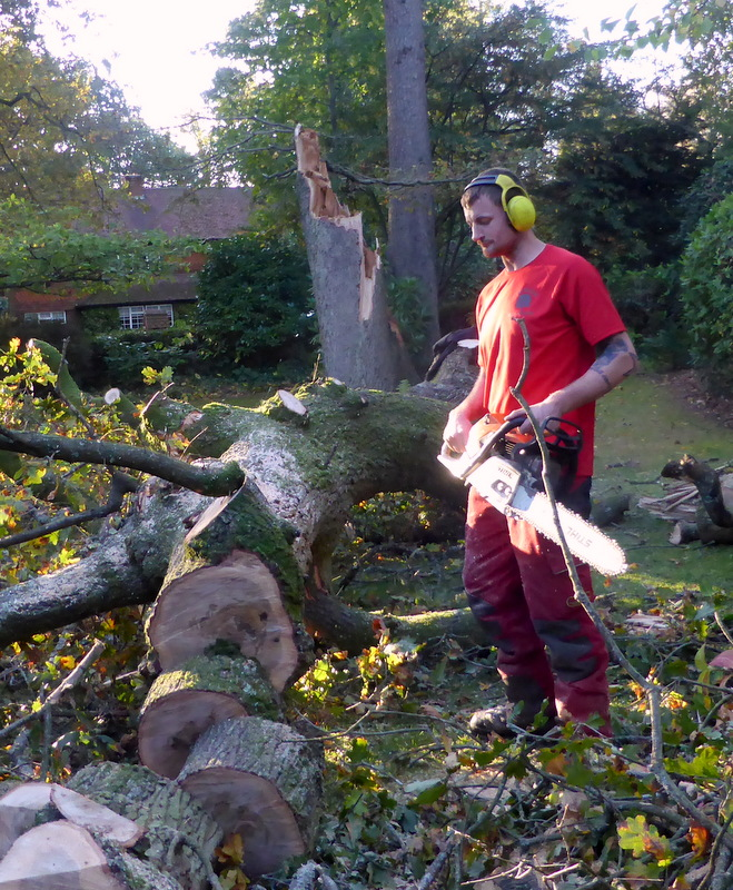 Tree surgery is less subtle than human surgery.