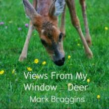 deer eating buttercups. Views From My Window by Mark Braggins - deer.