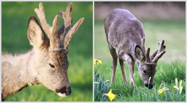 Just chillin'; Daffodils and rain. Views From My Window by Mark Braggins - deer.