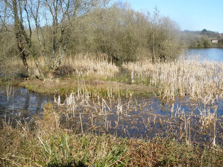 Blashford Lakes - Hampshire & Isle of Wight Wildlife Trust. Images by Chippy Minton.