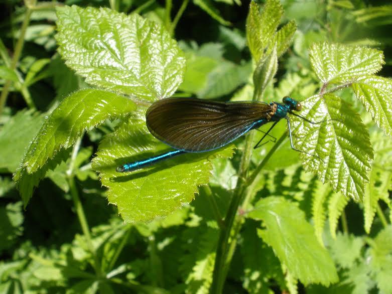 Blashford Lakes - Hampshire & Isle of Wight Wildlife Trust. Image: Chippy Minton.
