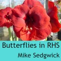 Butterflies in RHS Mike Sedgwick