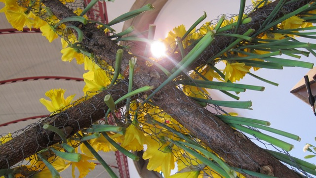 Daffodils St Boniface Church 2015 Easter