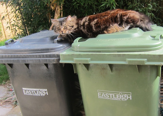 Next week: Green bin? Black bin? Billy can't make up his mind.