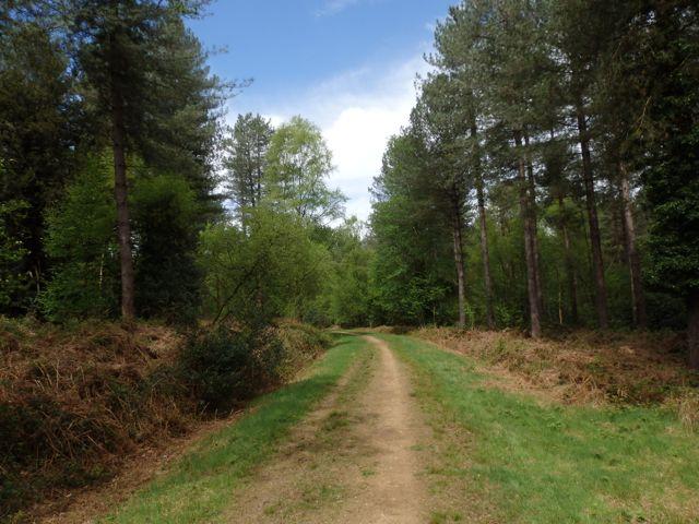 Hut Wood paths