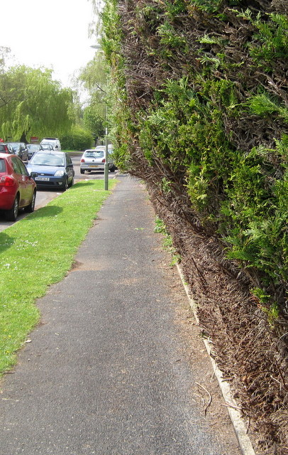 Hedge cut back at ground level but not at eye level.