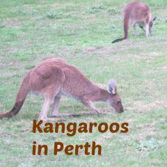 PicMonkey 10 Kangaroos 1