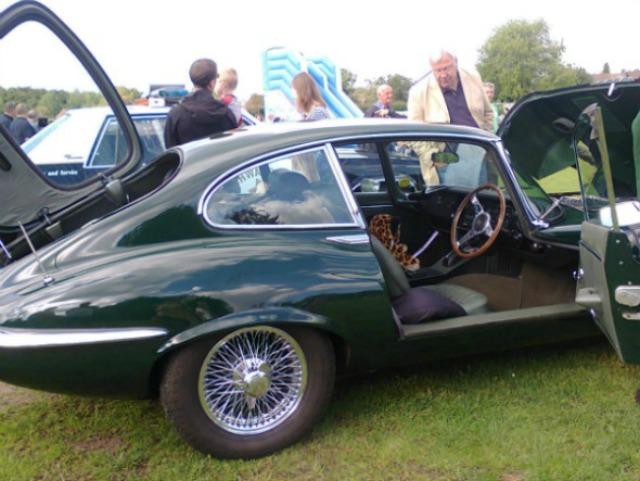 Jaguar and toy