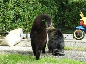 Maisie the Park Cat