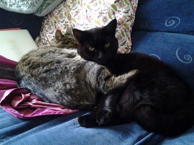 Maisie the cat