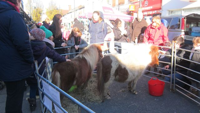 Eastleigh Market animals Nov 2015