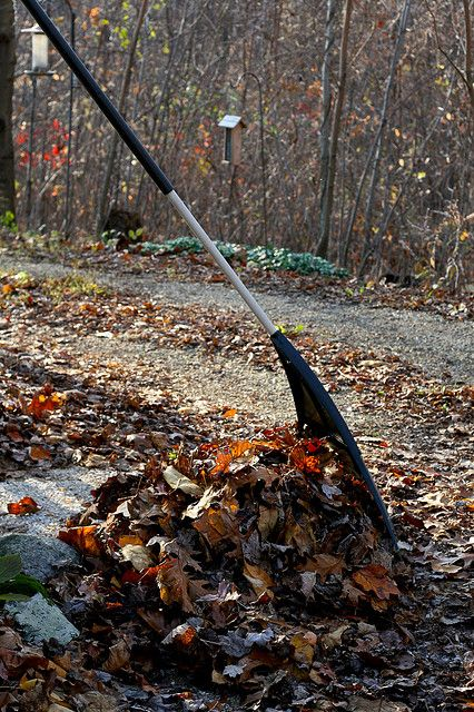 "Leaves should be composted. Raking leaves image by <a href=""https://www.flickr.com/photos/chiotsrun/4087597610/"">Susy Morris</a> via Flickr."