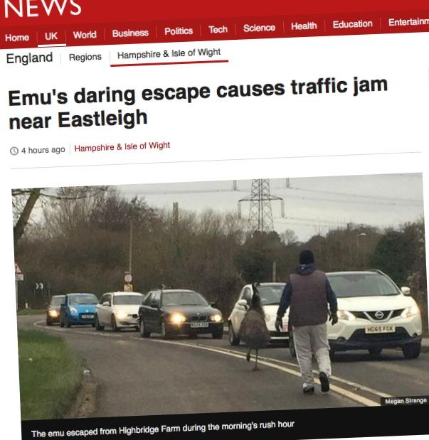 emu escaped Eastleigh