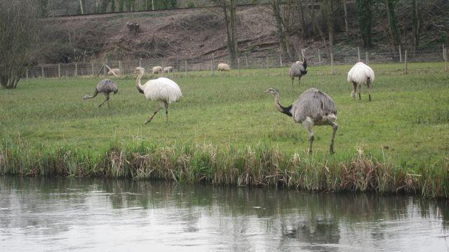 emu near brambridge park