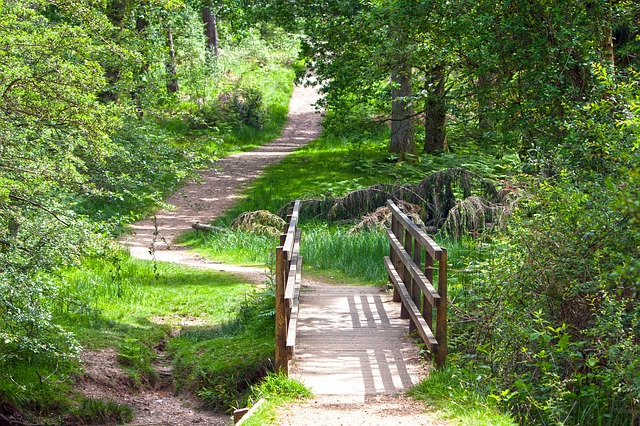 woodland trail - image via Pixabay