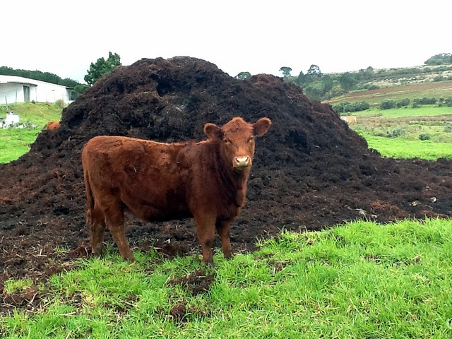 Plenty of manure is needed. Did I do that?