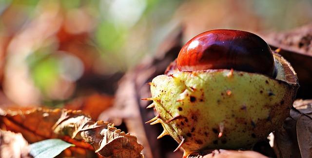chestnut image by pixel2013 via Pixabay