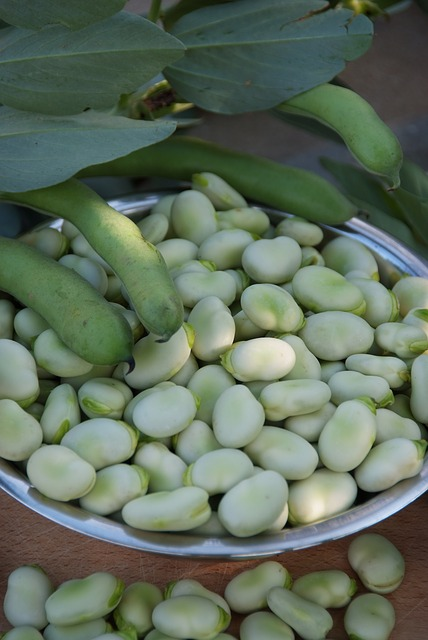 Broadbeans by Renia 123 via Pixabay