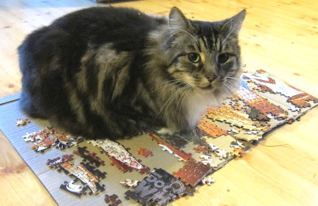Billy the cat sitting on the jigsaw puzzles. Christmas 2016.