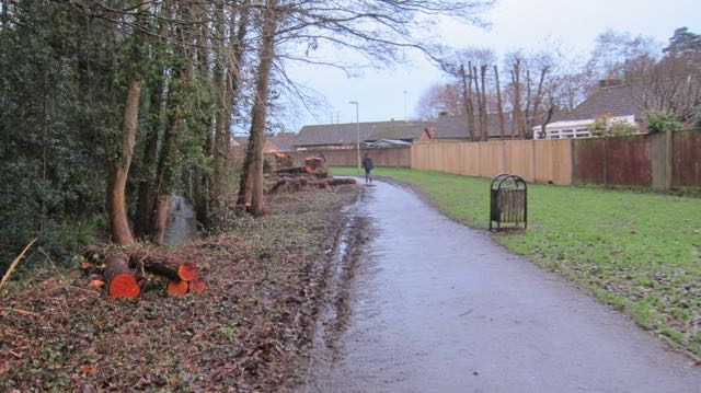 Valley Park by Monks Brook - many trees had been cut down.