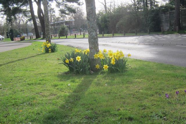 Spring in Hiltingbury, February 2017.