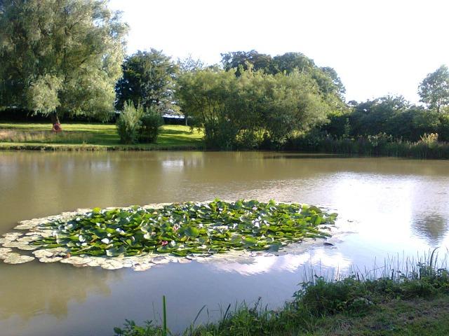 The lakes at Swanwick