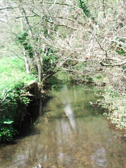 Monks Brook at Fleming Park