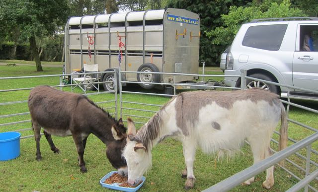 Animals Hiltingbury Extravaganza 17 Sep 2017