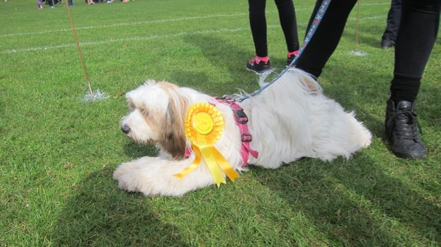 Disco, one of the winning dogs.