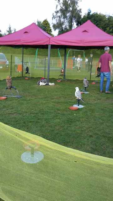 The Birds of Prey display