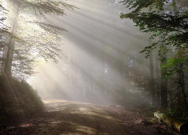 I love sunshine through the trees like this