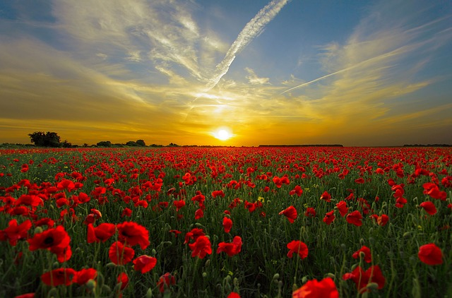 At the going down of the sun we will remember them. Image via Pixabay.