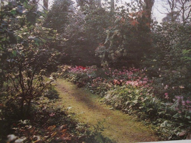 Mrs Doncaster's Garden in Chandler's Ford. (Image taken from The Garden, Journal of the Royal Horticultural Society, January 1982.)