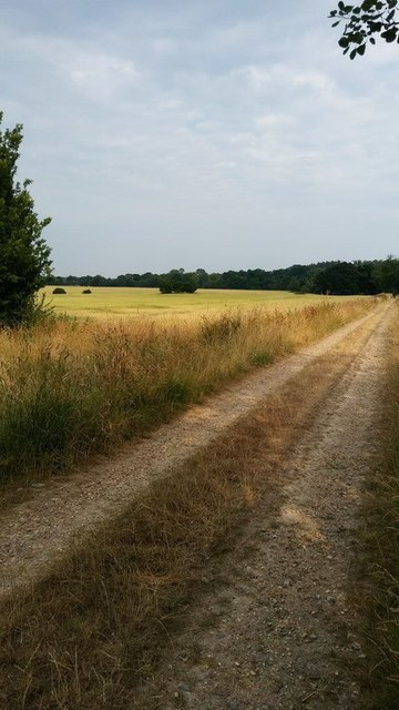 Part of the Monarch's way, looking across to farmland