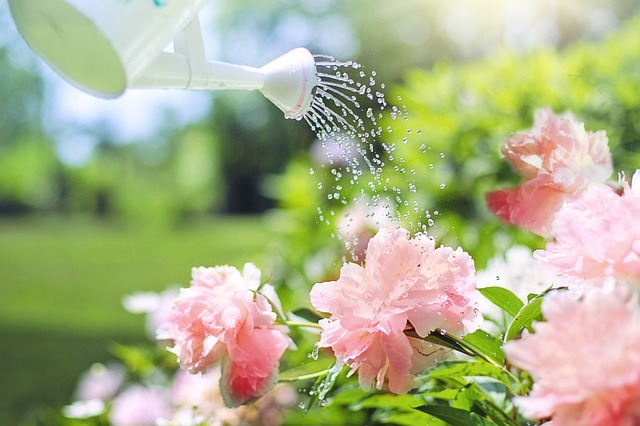 watering flowers via Pixabay