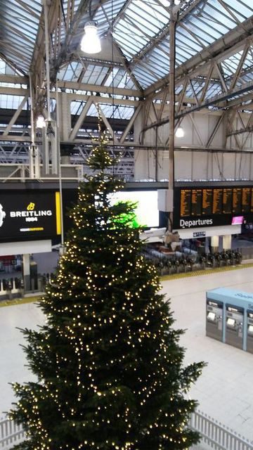 Christmas Tree at Waterloo - image by Allison Symes