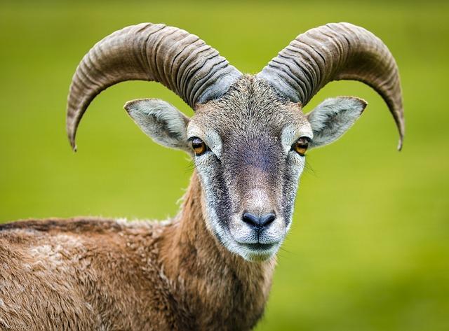 nature image by HPUweKlein via Pixabay
