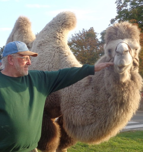camel training