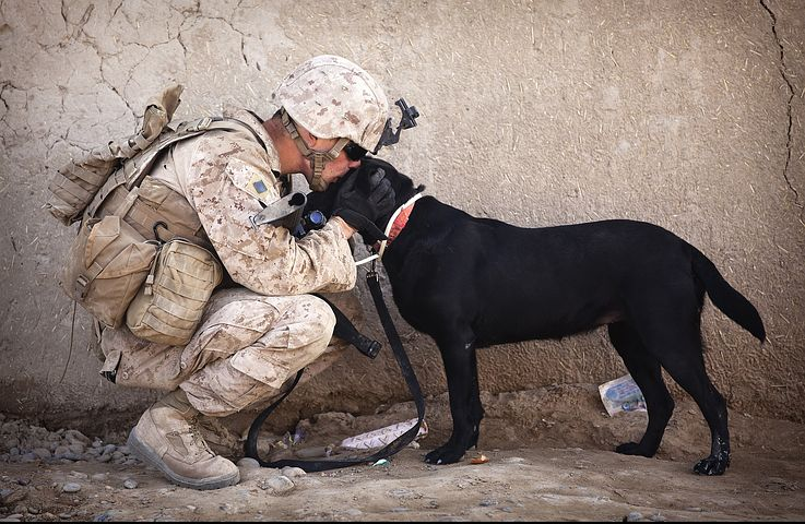 Dogs are used in the military and police of course. Lives are saved due to our four legged companions. Pixabay