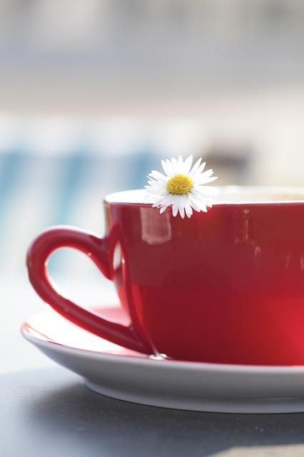cup ElsnerCladu image Pixabay
