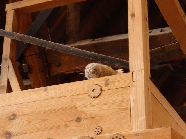 furry friend at winchester city mill