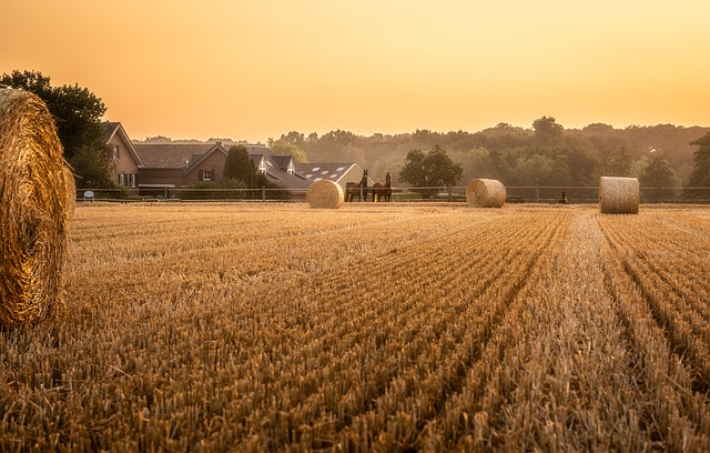cornfield sunrise image AndreasGoellner Pixabay