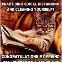 Social Distancing and cleaning yourself? That's a cat's life