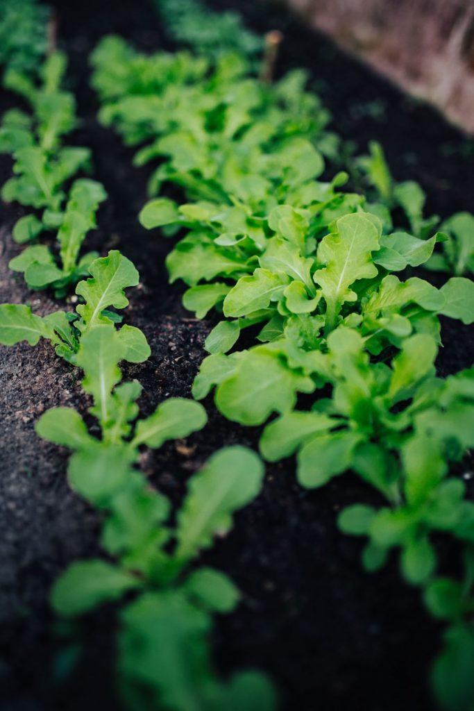 Gardening image by Roses image by Karolina Grabowska