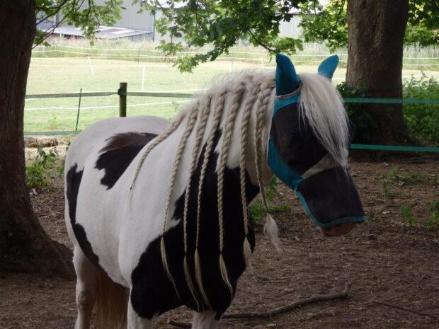 horse with plaited mane