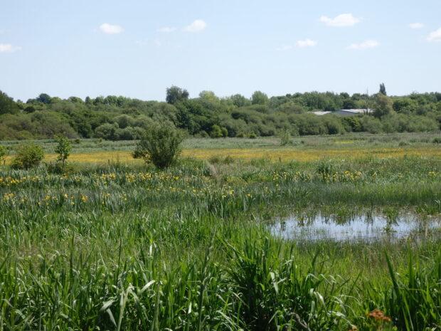 Winnal Moor