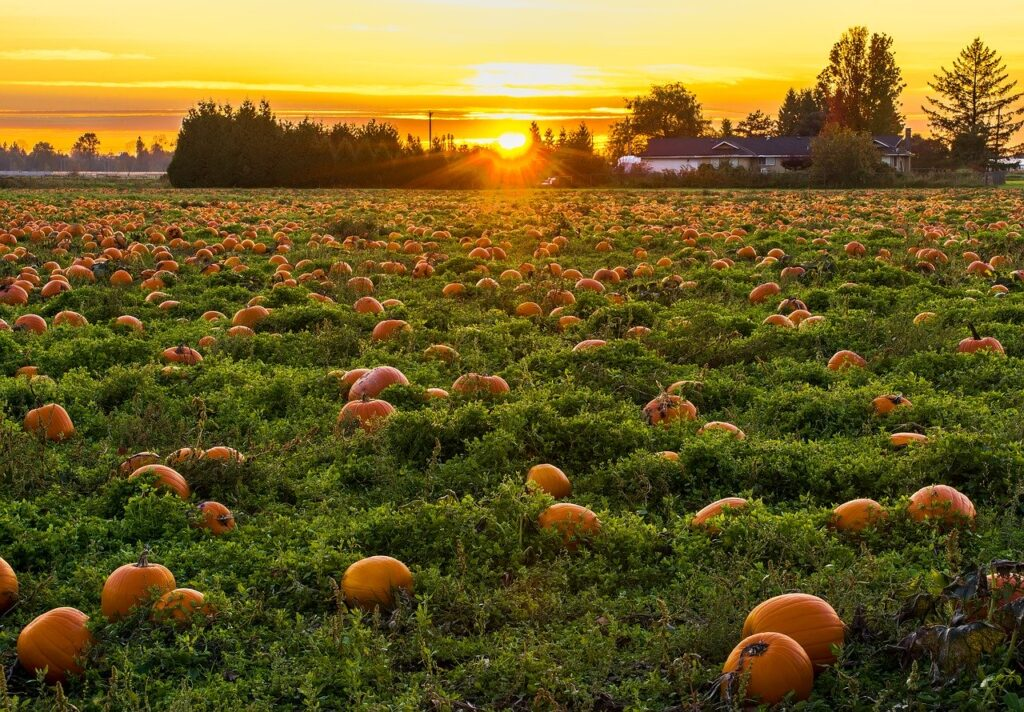 pumpkins image via Pixabay